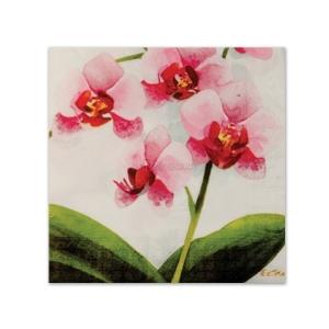 http://www.lemma.lv/3117-thickbox/salvetes-ar-attelu-roza-orhideja-33cm-20gab.jpg