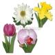 Коллекция цветов, классика, декорация из бумаги